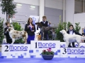 junior handler 1 domenica