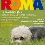 Regionale di Roma 18 maggio 2014