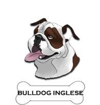 bulldogeng