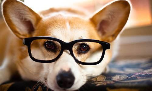 cane-con-occhiali