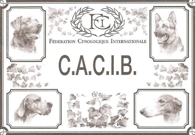 cacib_10